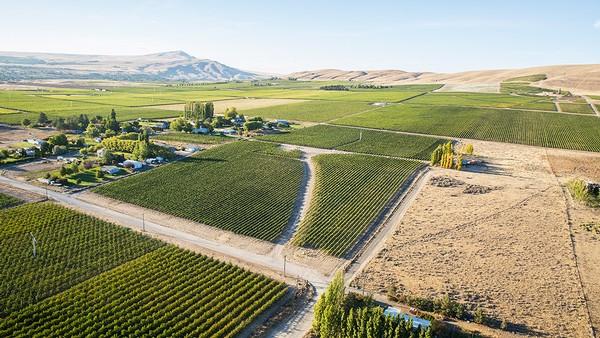 red mountain wine vineyard